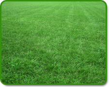 Commercial Sod Installers Orlando, Florida