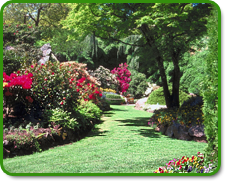 Commercial Landscaping Services Orlando, Florida